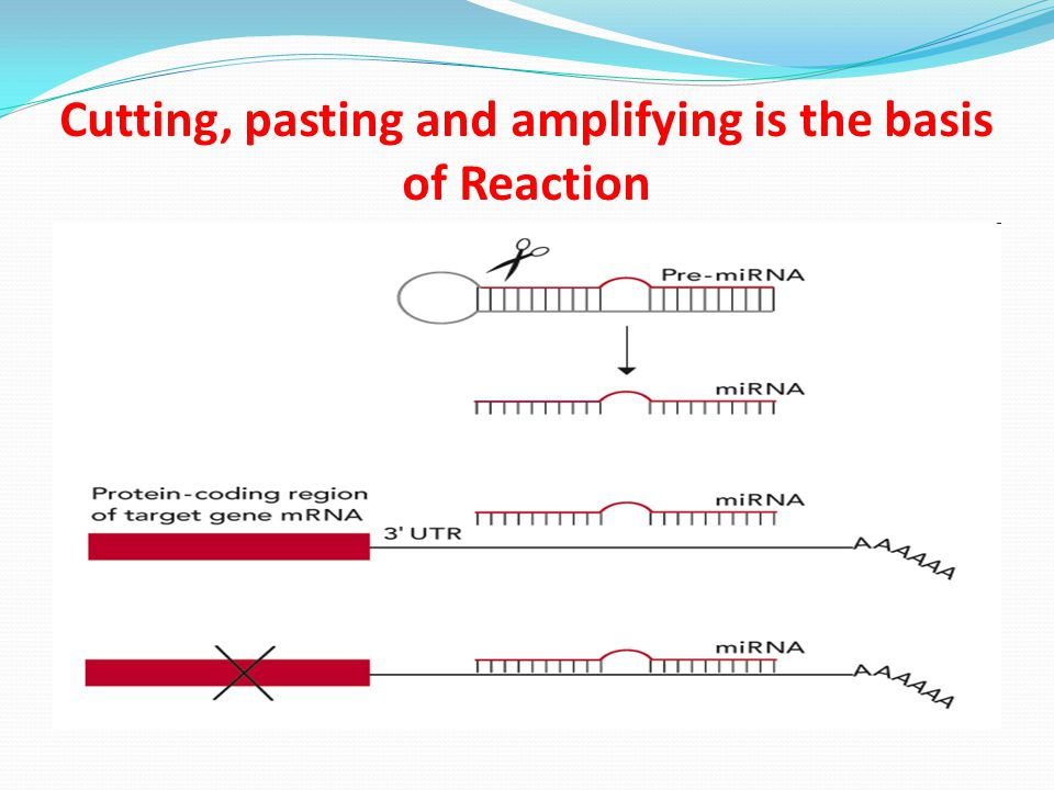Cutting, pasting and amplifying is the basis of Reaction