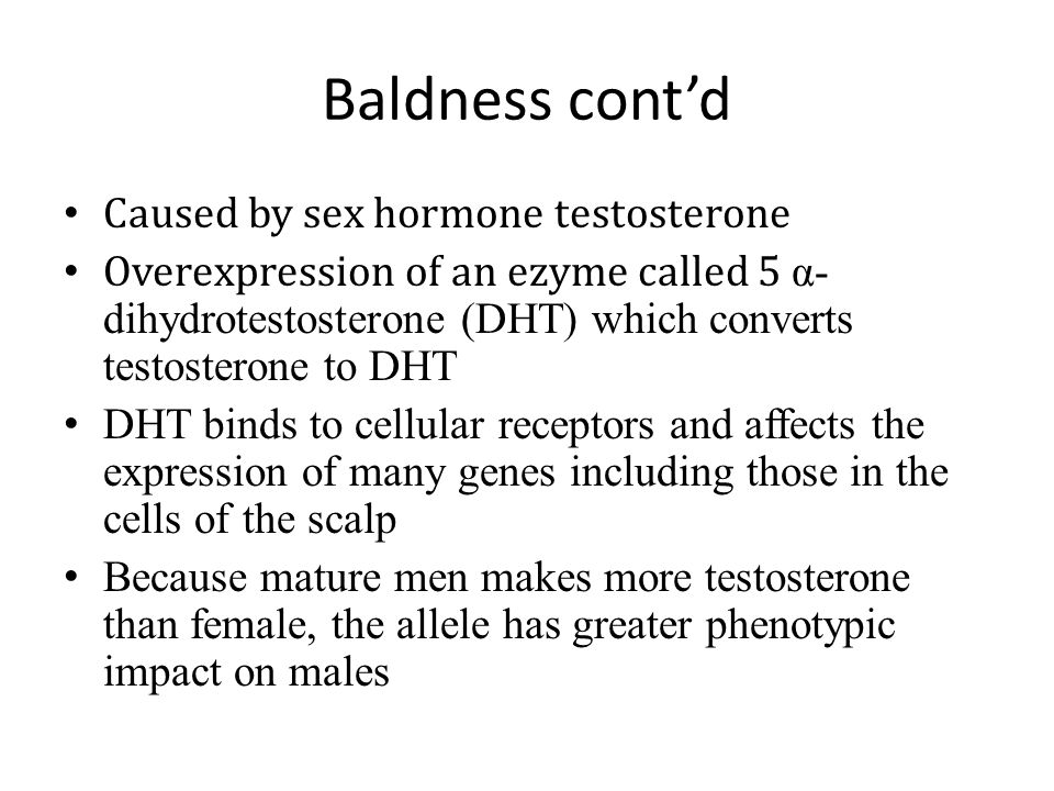 Baldness cont'd Caused by sex hormone testosterone