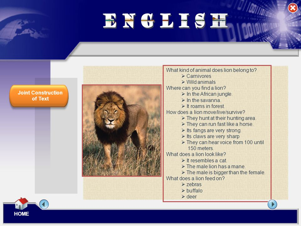 ENGLISH What kind of animal does lion belong to Carnivores