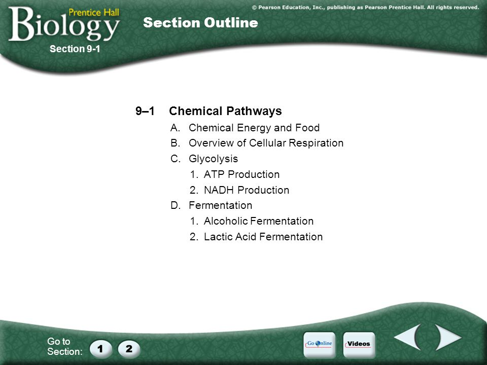 Section Outline 9–1 Chemical Pathways A. Chemical Energy and Food