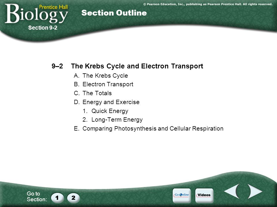 Section Outline 9–2 The Krebs Cycle and Electron Transport