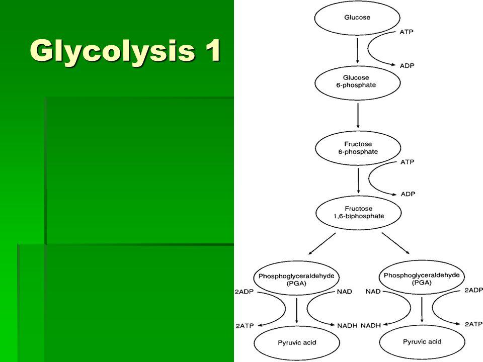 Glycolysis 1