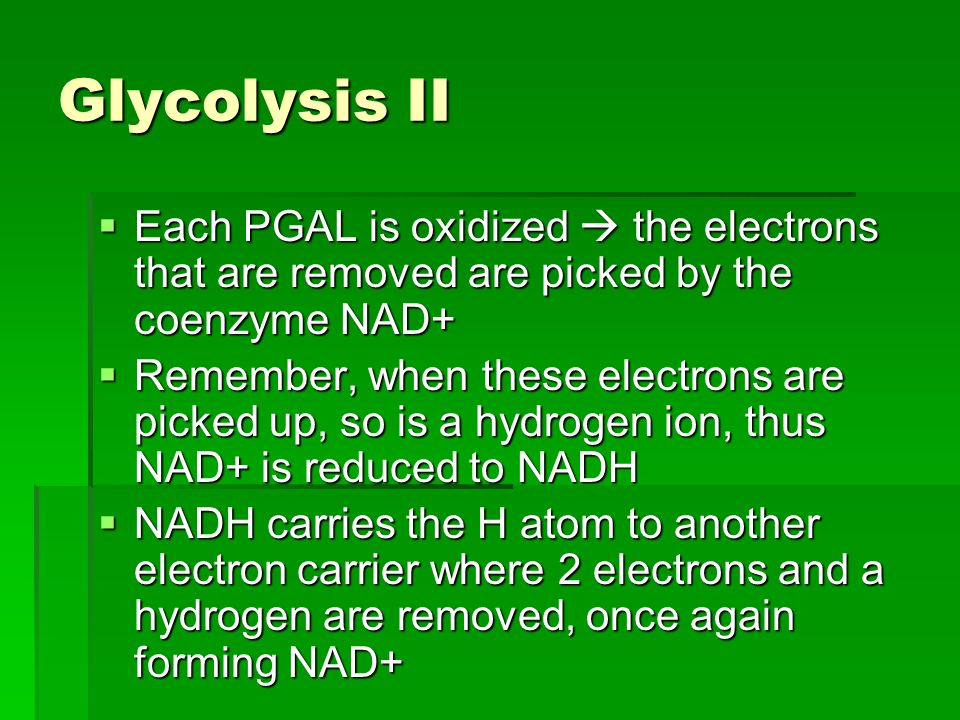 Glycolysis II Each PGAL is oxidized  the electrons that are removed are picked by the coenzyme NAD+