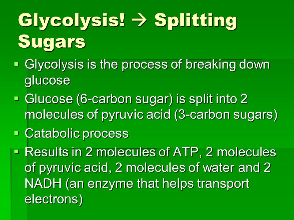 Glycolysis!  Splitting Sugars