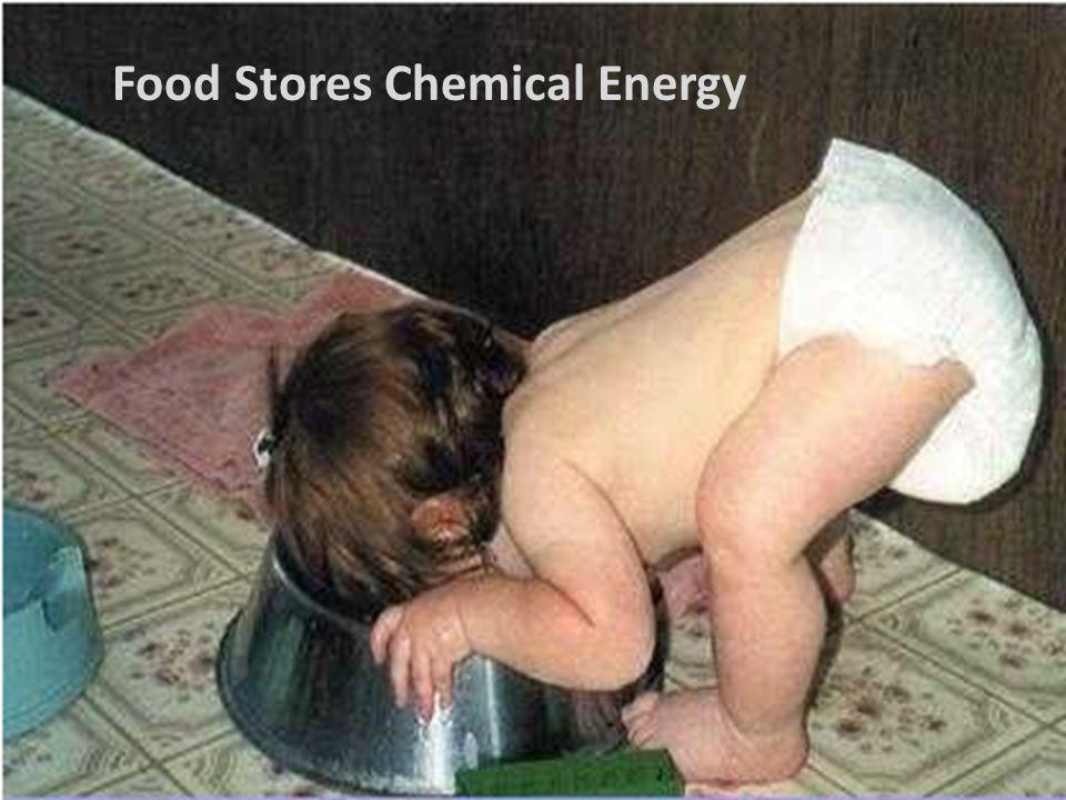 Food Stores Chemical Energy