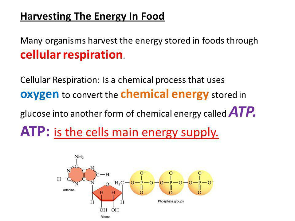 ATP: is the cells main energy supply.