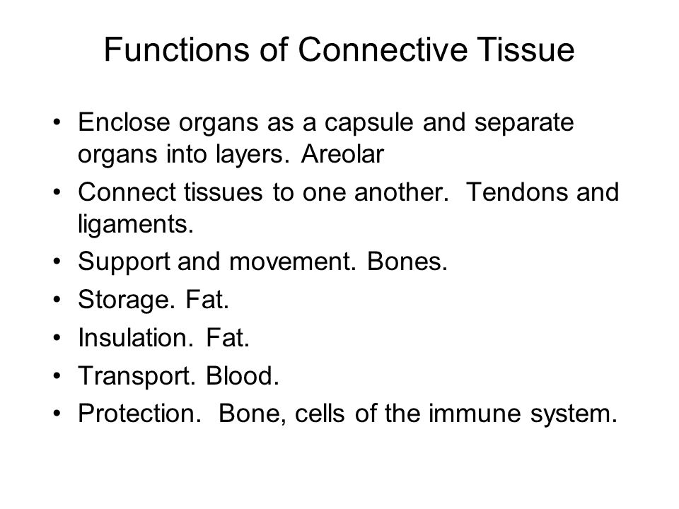Functions of Connective Tissue
