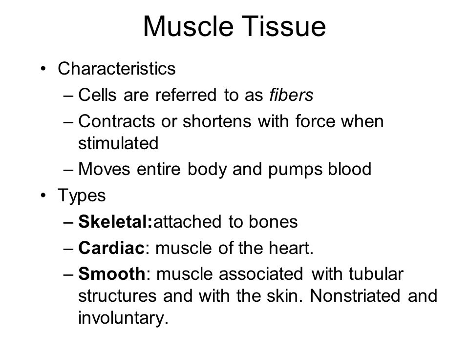 Muscle Tissue Characteristics Cells are referred to as fibers