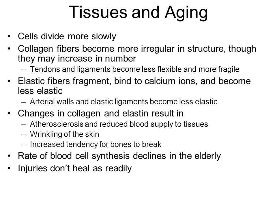 Tissues and Aging Cells divide more slowly