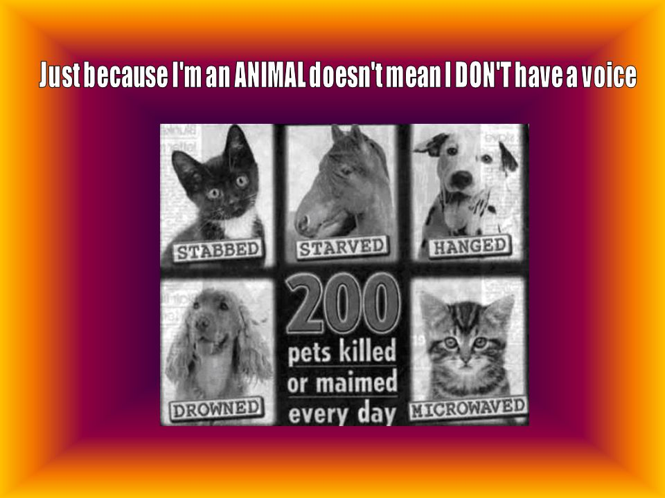 Just because I m an ANIMAL doesn t mean I DON T have a voice