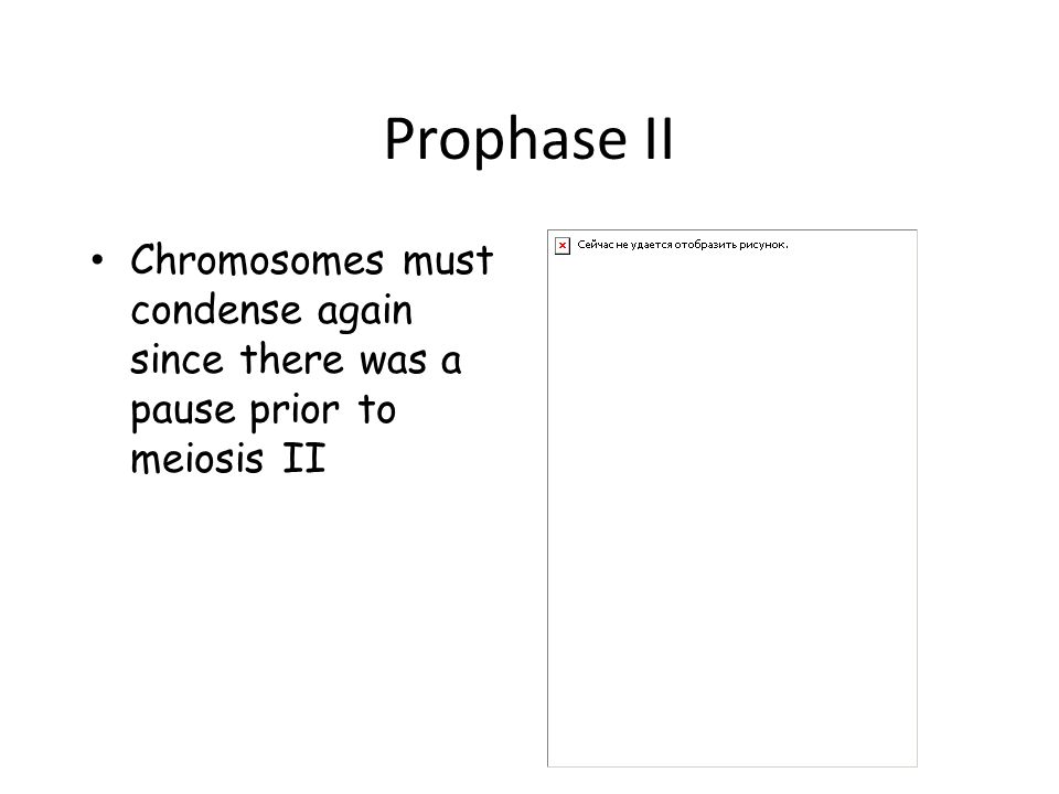 Prophase II Chromosomes must condense again since there was a pause prior to meiosis II