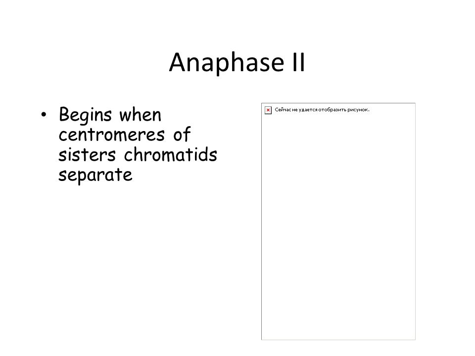 Anaphase II Begins when centromeres of sisters chromatids separate