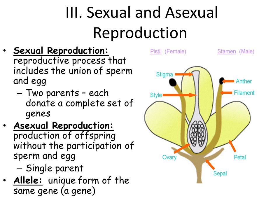III. Sexual and Asexual Reproduction