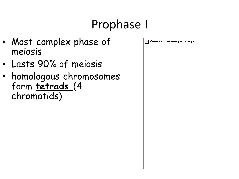 Prophase I Most complex phase of meiosis Lasts 90% of meiosis