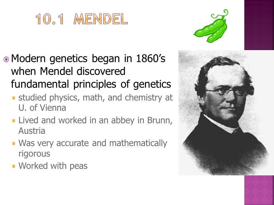 10.1 Mendel Modern genetics began in 1860's when Mendel discovered fundamental principles of genetics.