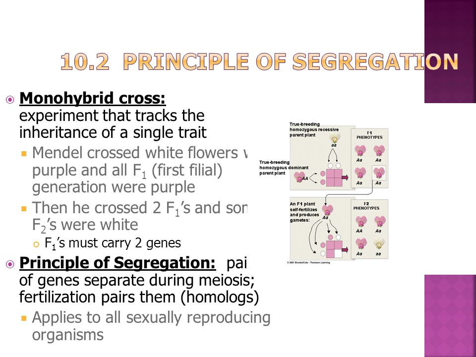 10.2 Principle of Segregation