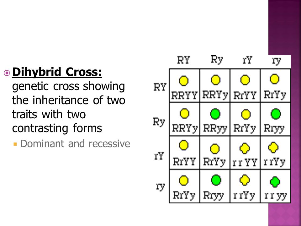 Dihybrid Cross: genetic cross showing the inheritance of two traits with two contrasting forms