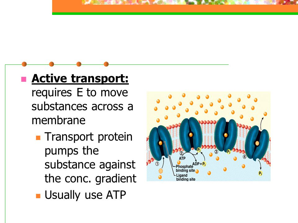 Active transport: requires E to move substances across a membrane