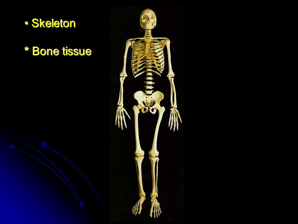 Skeleton * Bone tissue
