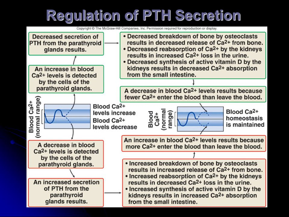 Regulation of PTH Secretion
