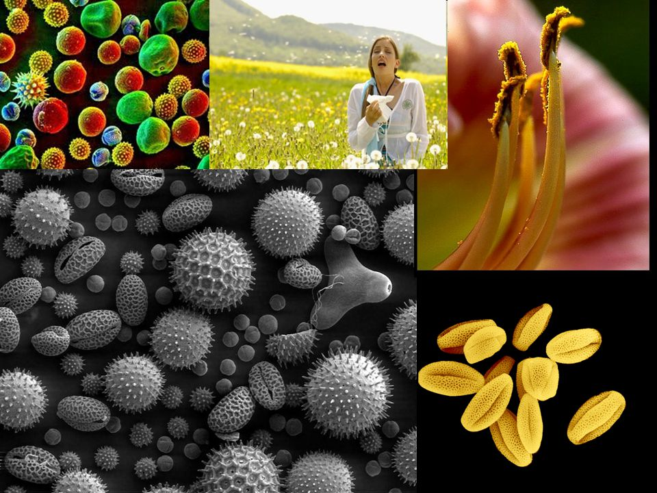 There are many substances that cause to these over reactions: pollen, dust, dust mites, foods, feather fibres, antibiotics, insect bites…