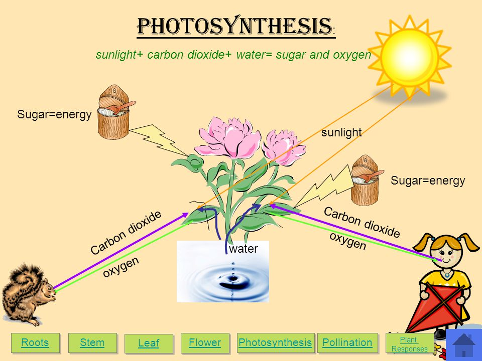 sunlight+ carbon dioxide+ water= sugar and oxygen