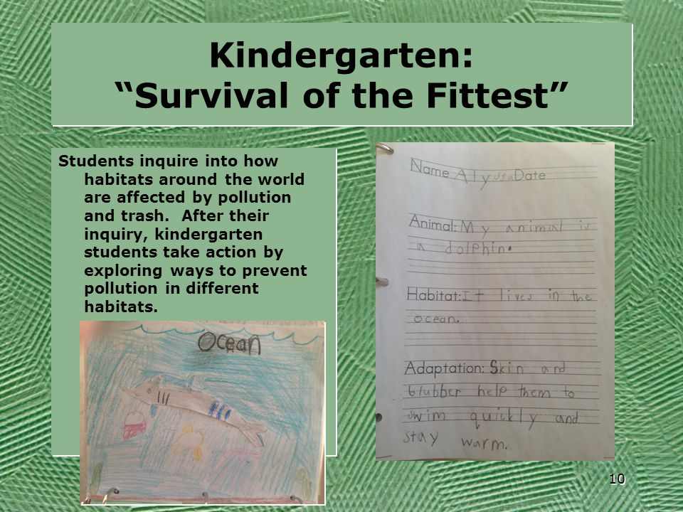 Kindergarten: Survival of the Fittest