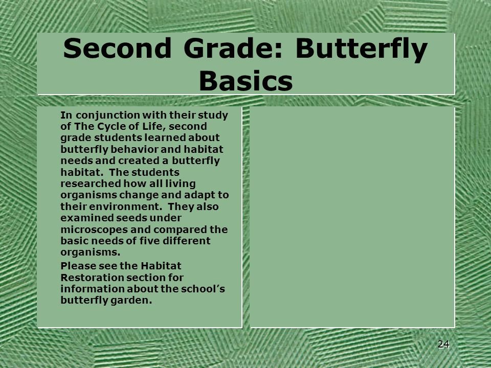 Second Grade: Butterfly Basics