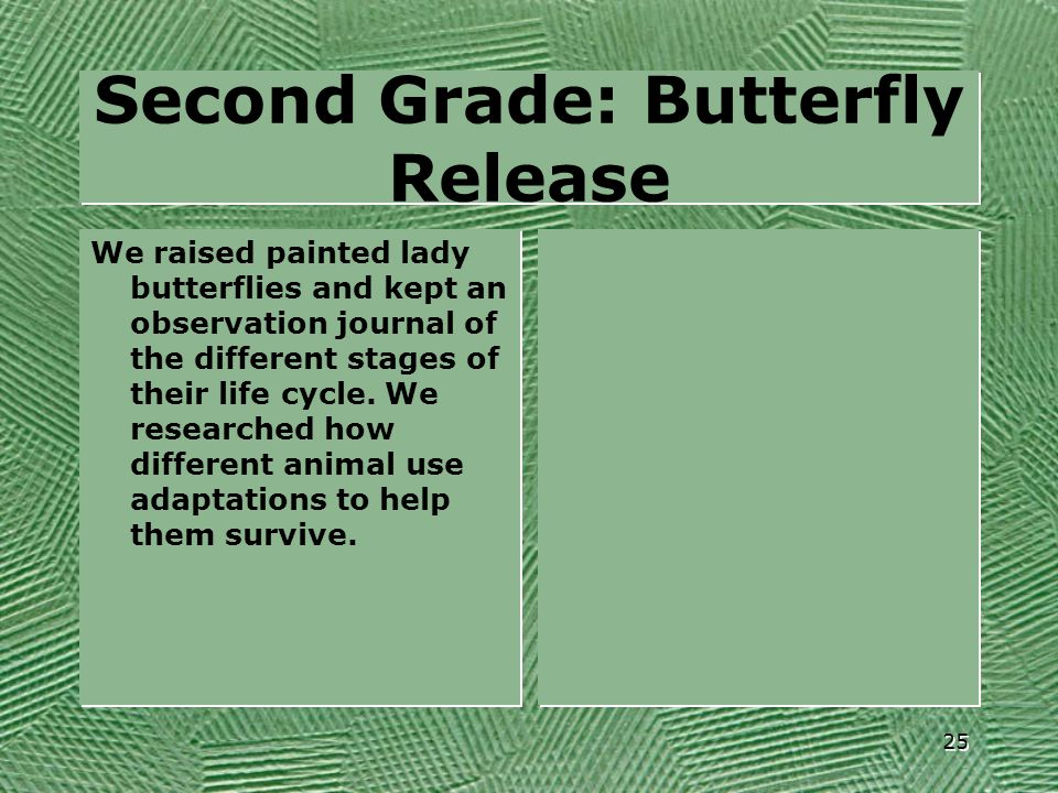 Second Grade: Butterfly Release