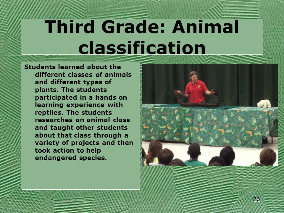 Third Grade: Animal classification
