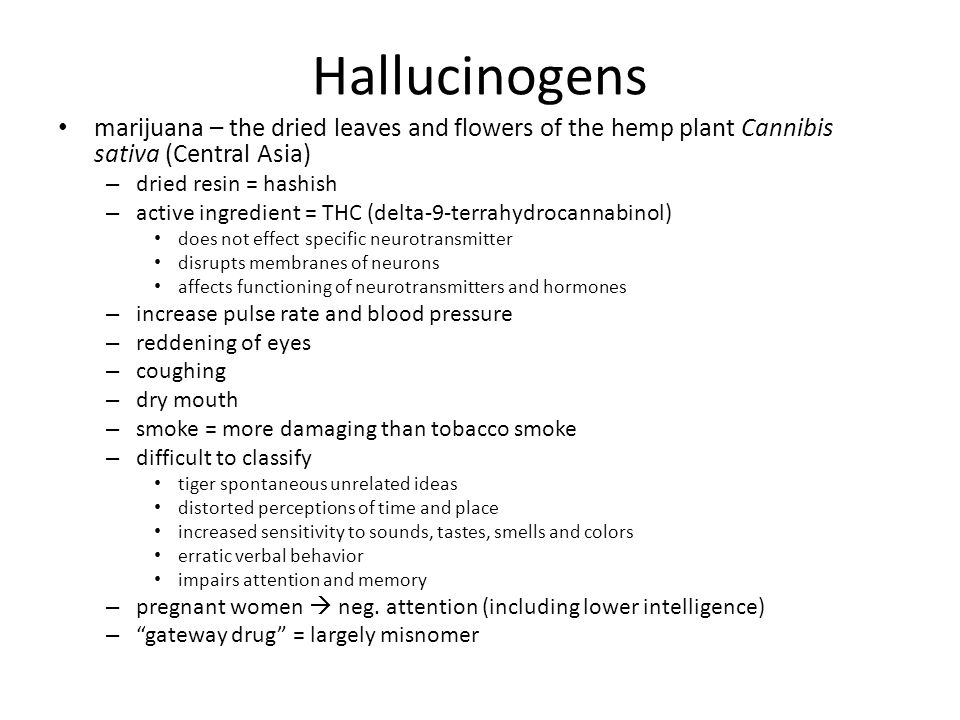 Hallucinogens marijuana – the dried leaves and flowers of the hemp plant Cannibis sativa (Central Asia)