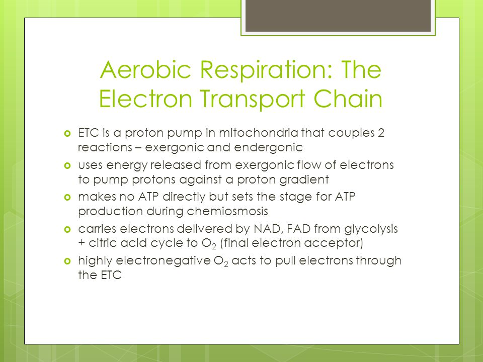 Aerobic Respiration: The Electron Transport Chain