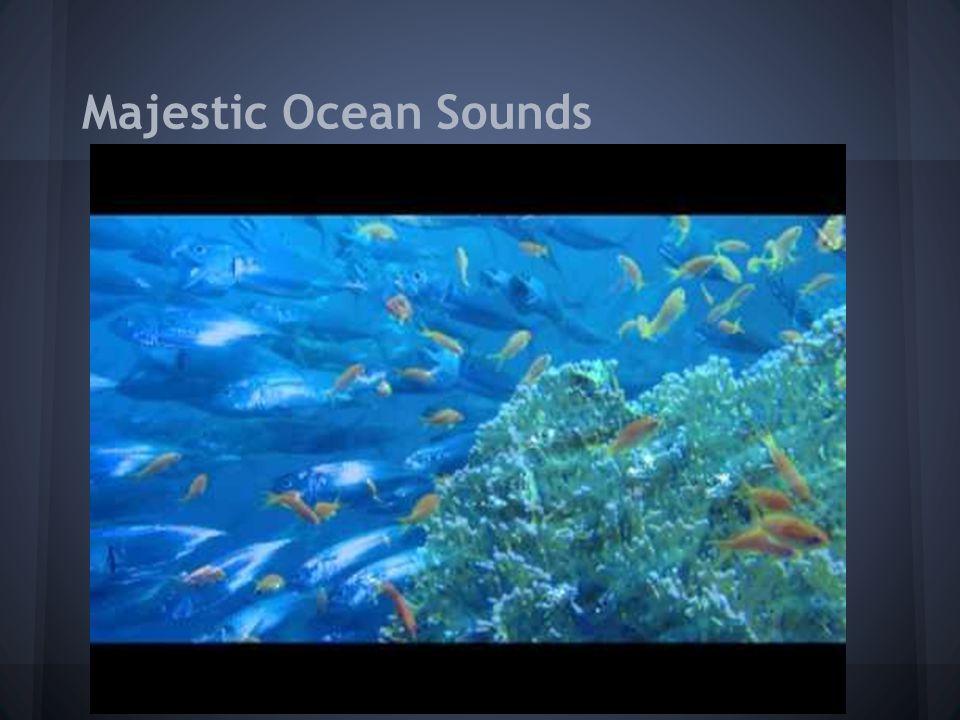 Majestic Ocean Sounds
