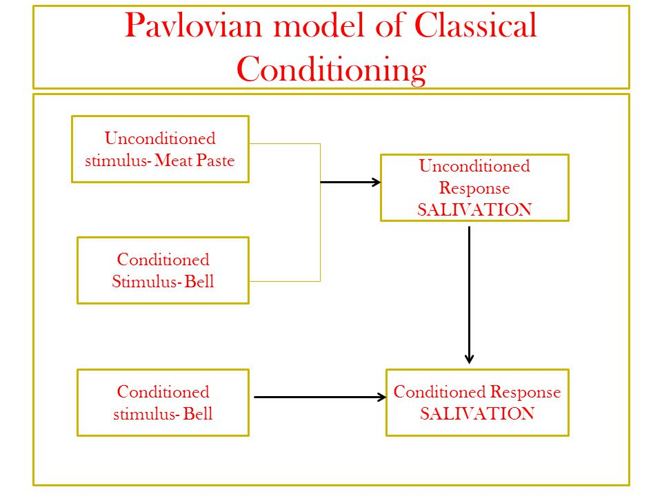 Pavlovian model of Classical Conditioning
