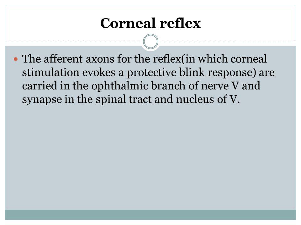 Corneal reflex