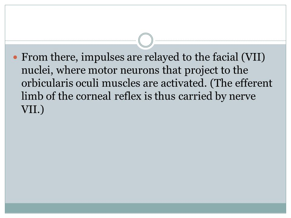 From there, impulses are relayed to the facial (VII) nuclei, where motor neurons that project to the orbicularis oculi muscles are activated.