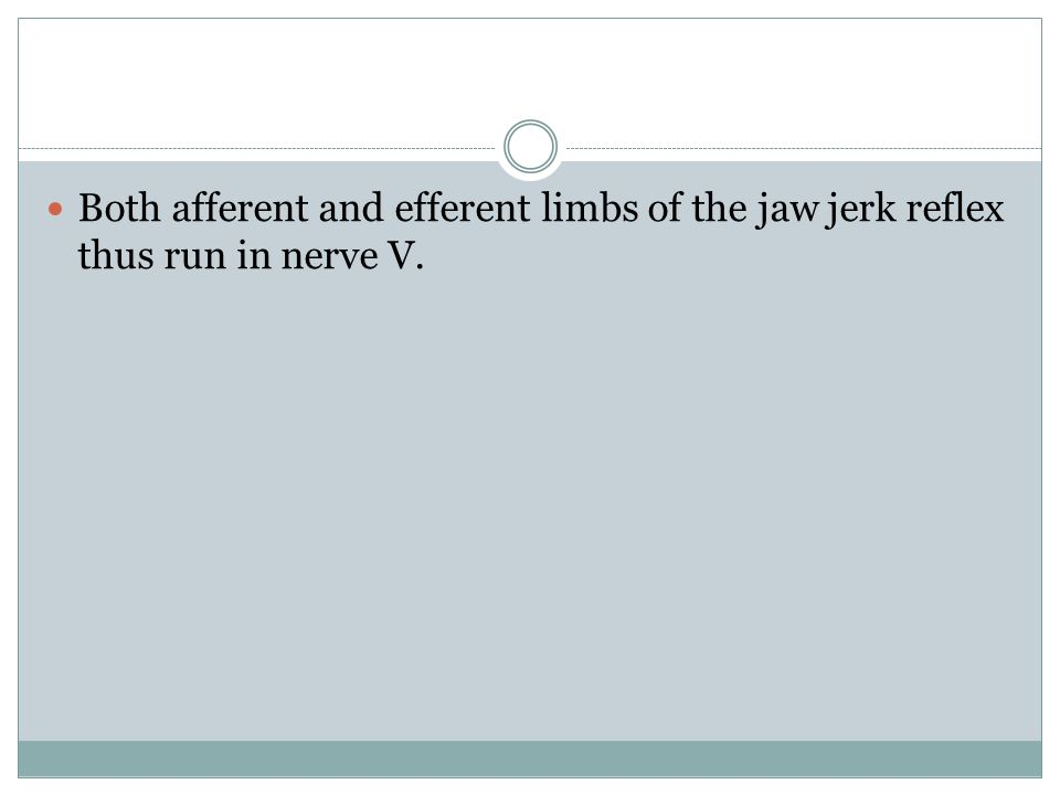 Both afferent and efferent limbs of the jaw jerk reflex thus run in nerve V.