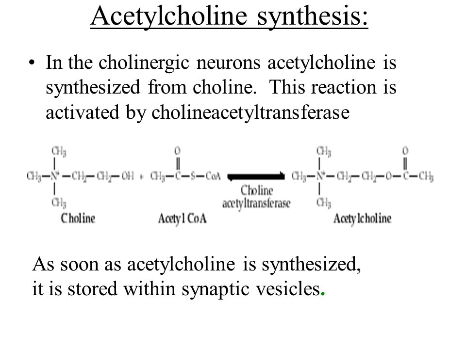 Acetylcholine synthesis: