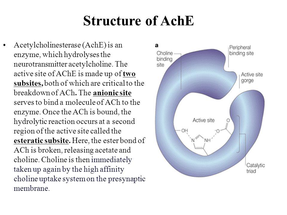 Structure of AchE
