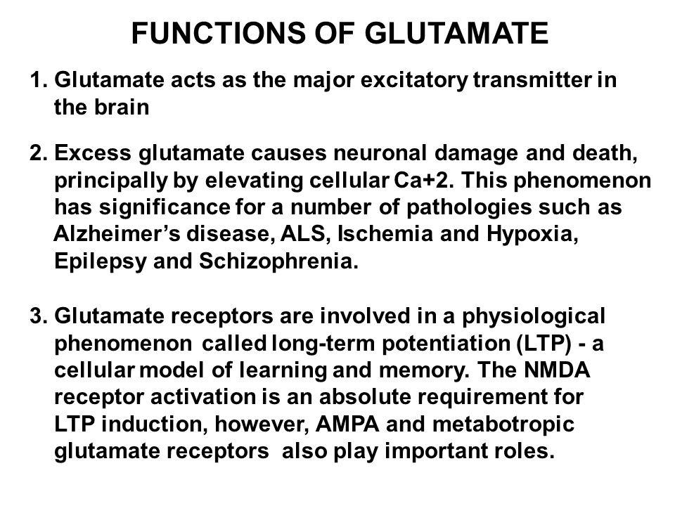 FUNCTIONS OF GLUTAMATE