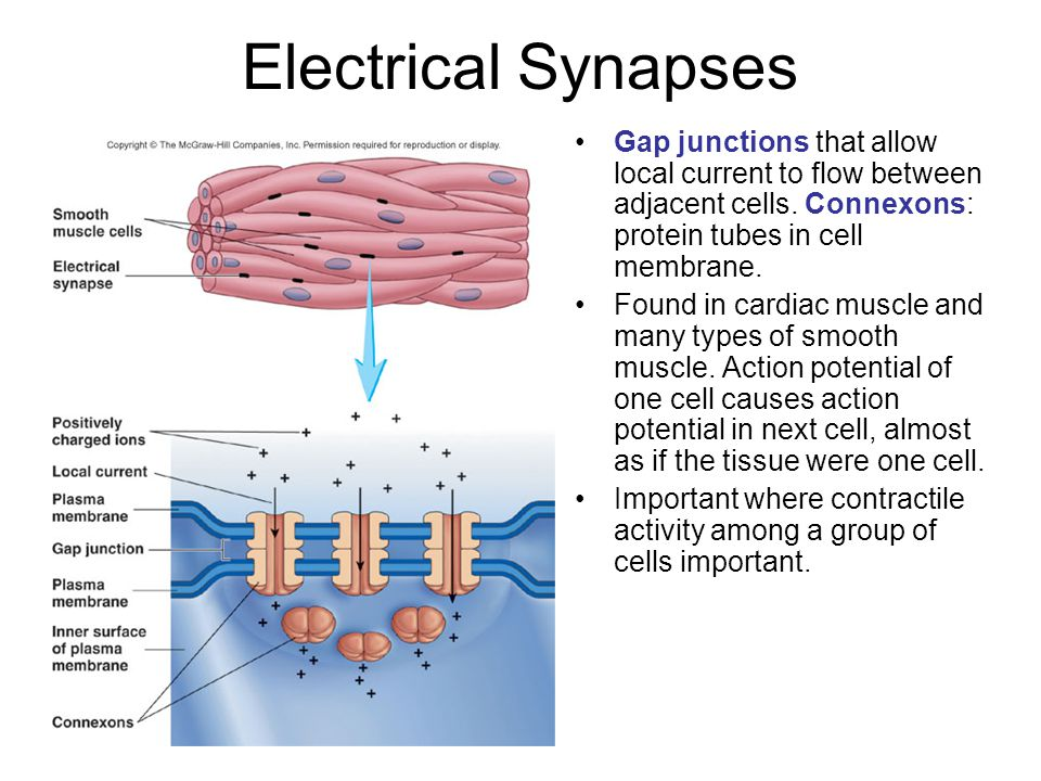 Electric Current Locator : Synapse and neurotransmitter ppt video online download