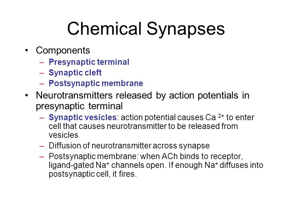 Chemical Synapses Components