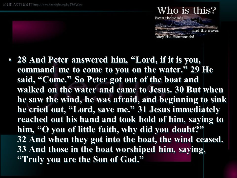 28 And Peter answered him, Lord, if it is you, command me to come to you on the water. 29 He said, Come. So Peter got out of the boat and walked on the water and came to Jesus. 30 But when he saw the wind, he was afraid, and beginning to sink he cried out, Lord, save me. 31 Jesus immediately reached out his hand and took hold of him, saying to him, O you of little faith, why did you doubt 32 And when they got into the boat, the wind ceased. 33 And those in the boat worshiped him, saying, Truly you are the Son of God.