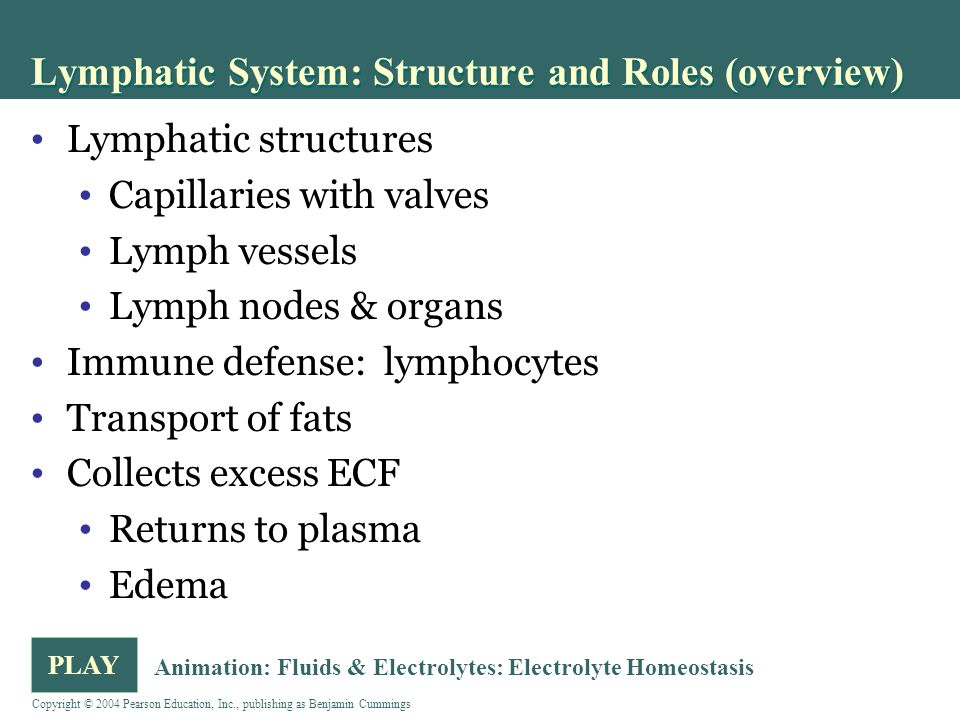 Lymphatic System: Structure and Roles (overview)
