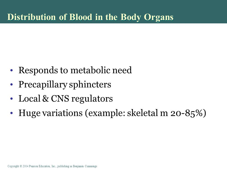 Distribution of Blood in the Body Organs