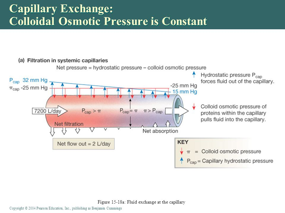 Capillary Exchange: Colloidal Osmotic Pressure is Constant