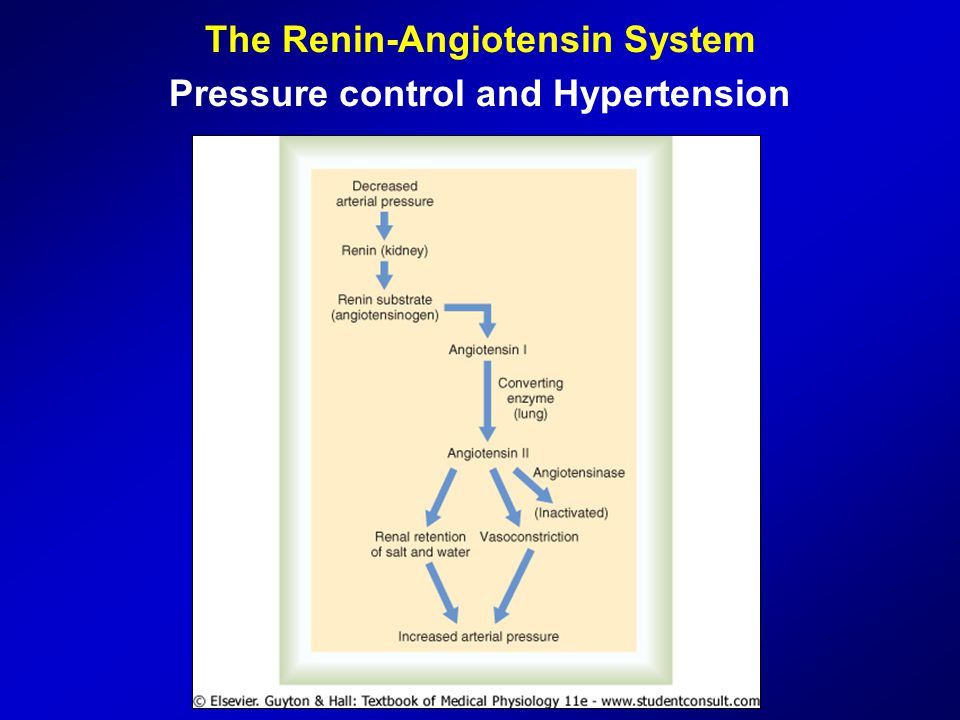The Renin-Angiotensin System Pressure control and Hypertension