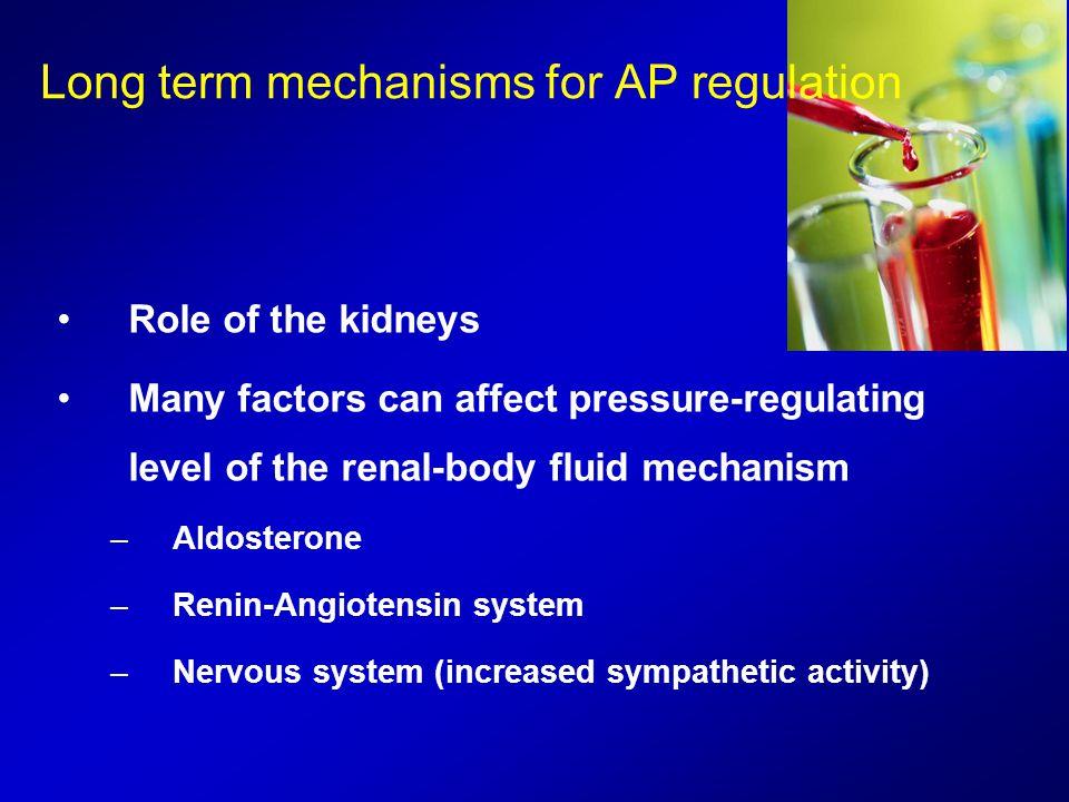 Long term mechanisms for AP regulation