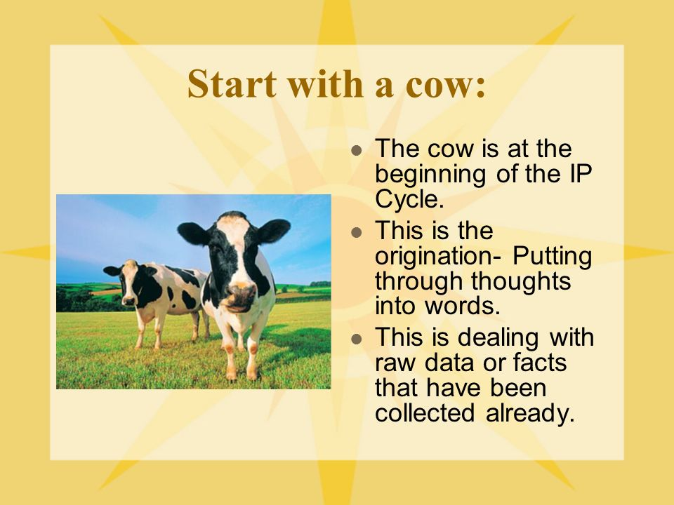 Start with a cow: The cow is at the beginning of the IP Cycle.