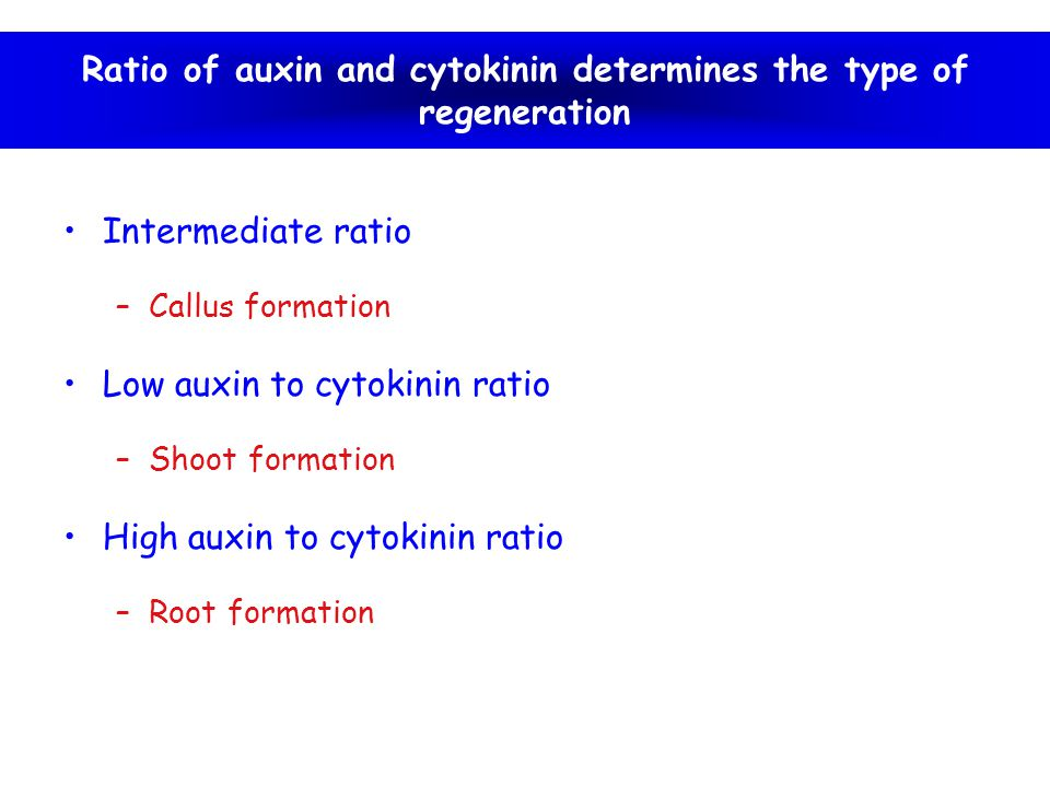 Ratio of auxin and cytokinin determines the type of regeneration